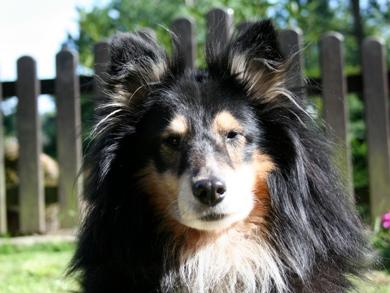 Biko Portrait